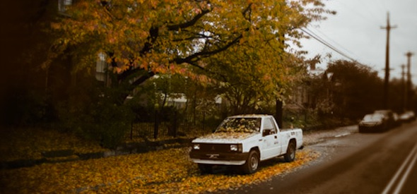 Leaves falling on car
